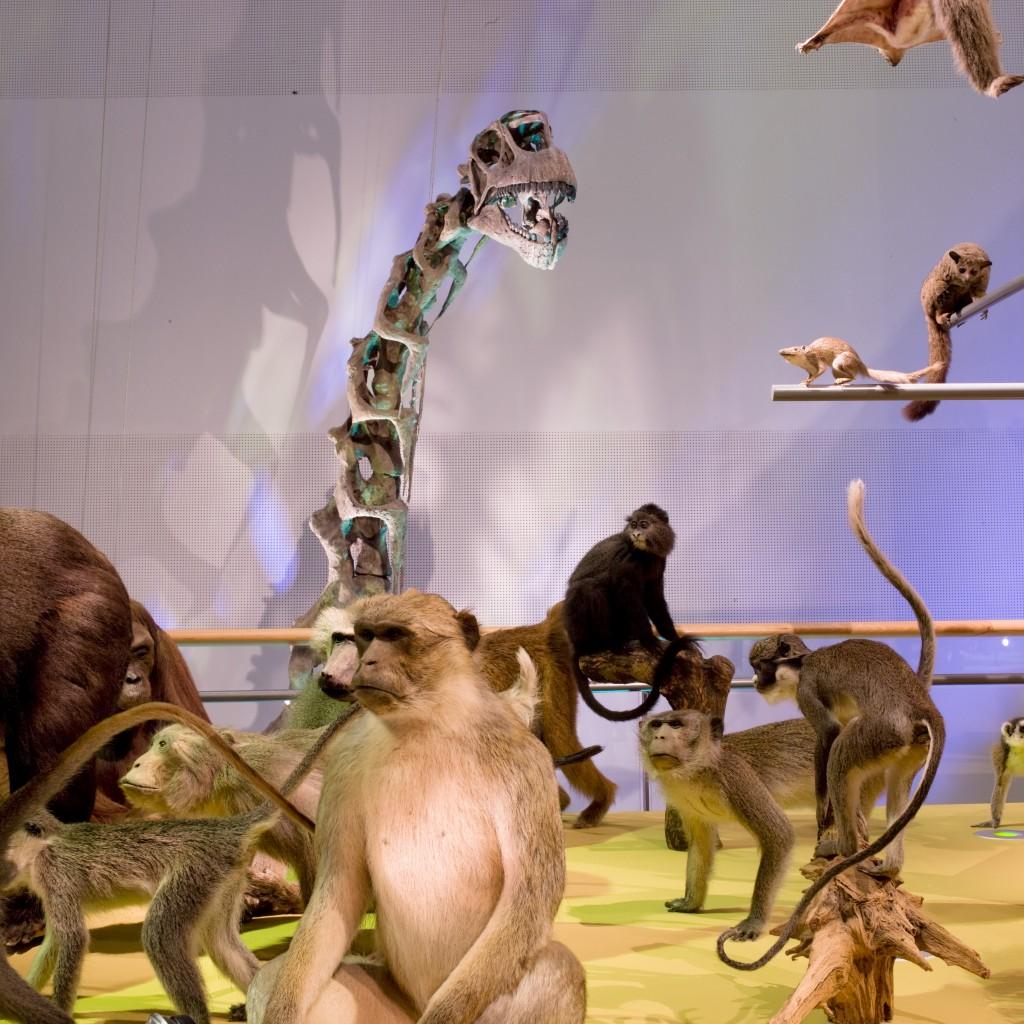superzintuigen, kindermuseum, museum leuk voor kinderen, naturalist