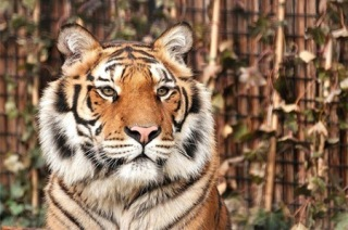 landgoed hoenderdaell, dagje weg, de leukste dierentuin in nederland, goedloop dagje uit, blog lodi