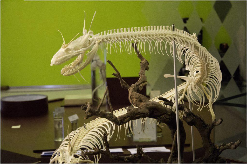 foto-skelet-draak-04