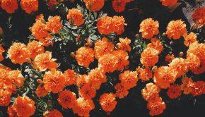 koningsdag oranje bloemen