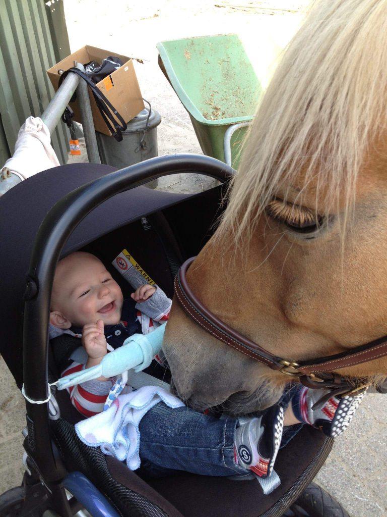 baby-gek-op-paarden