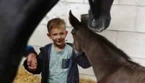 Zoon-gek-op-paarden