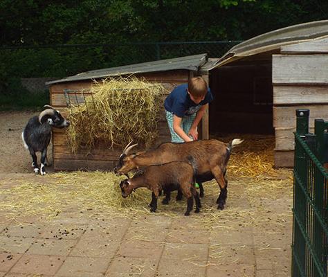 leuk voor kinderen, ezelboerderij, dagje weg met kinderen