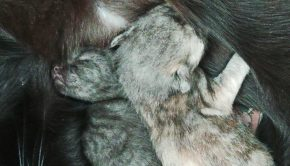 poes krijgt kittens