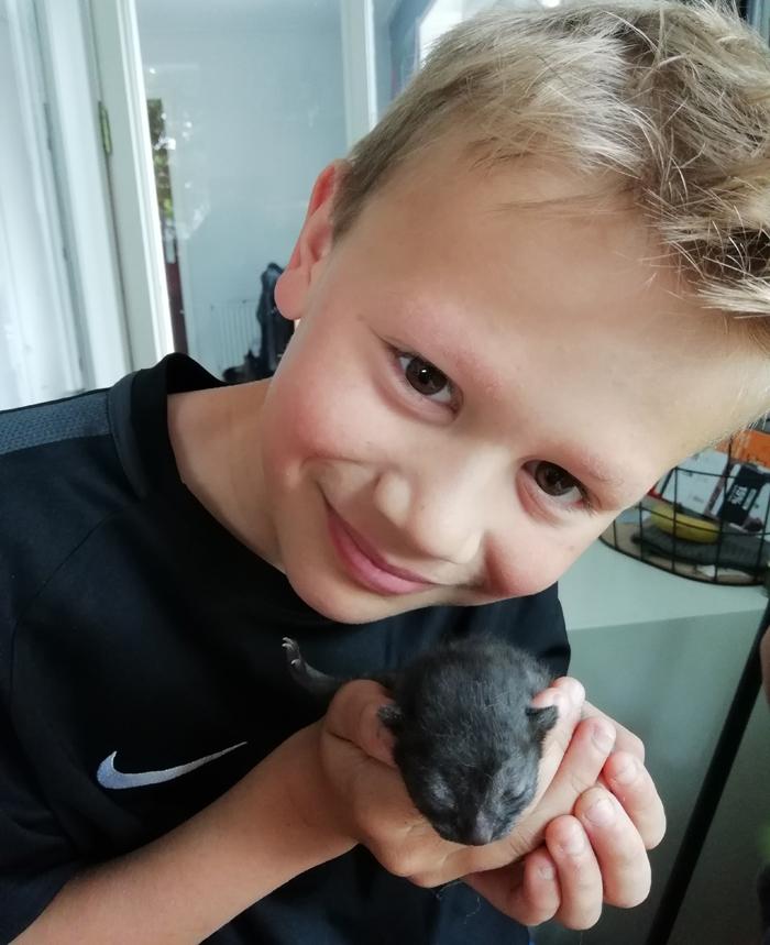 poes krijgt kittens, jonge poesjes