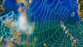 herfst op komst, het is herfst, spinnenwebben herfst