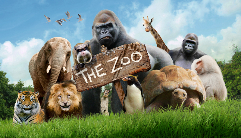 the zoo, televisie serie over dieren, boomerang the zoo